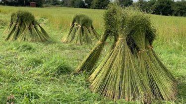 Flax Circles: Think Global, Grow Local